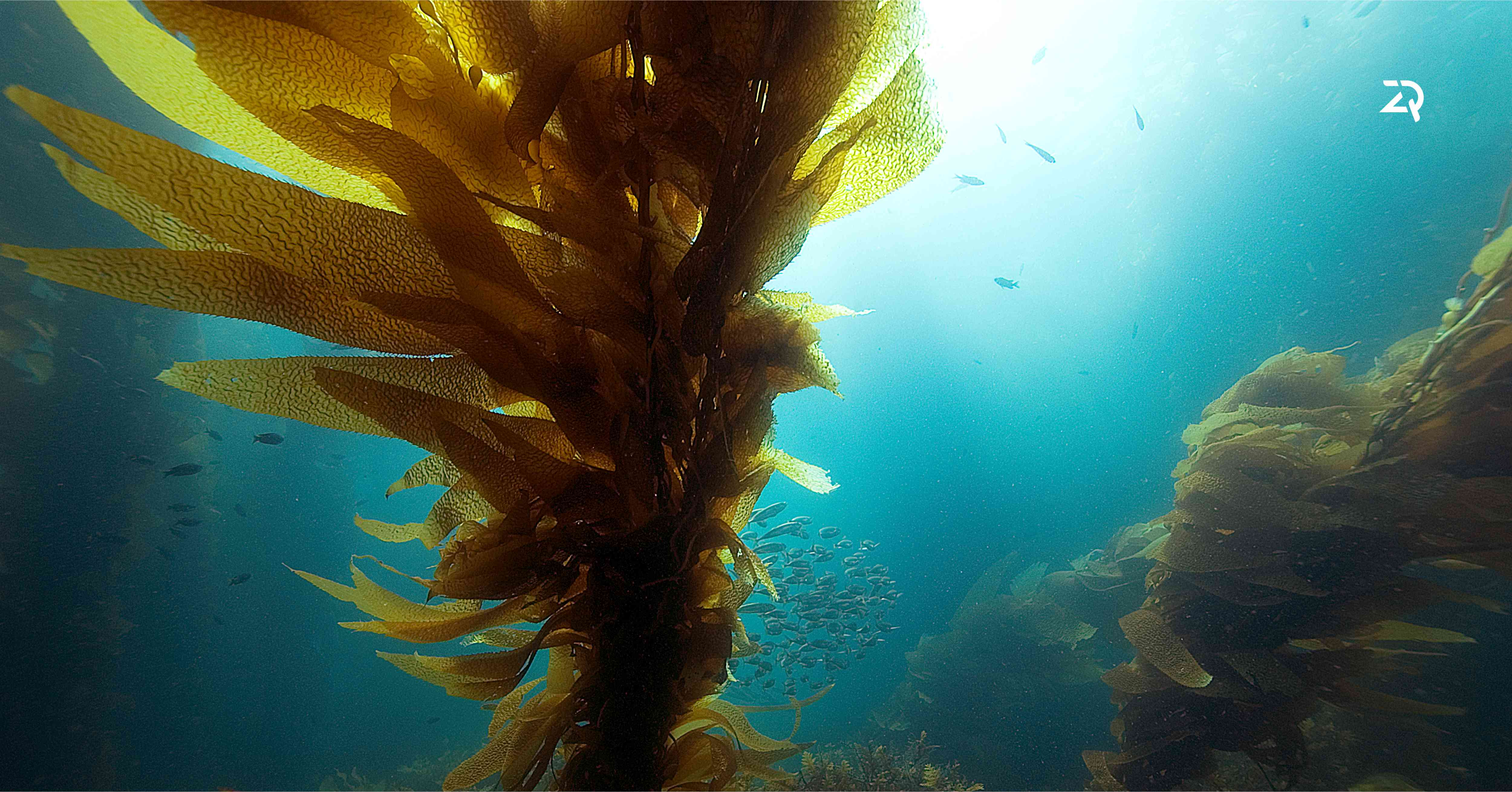 5 key components of Norwegian kelp that have a positive effect on our health